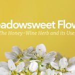 Traditional Uses of the Meadowsweet Flower