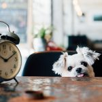 Pets have 'inner clock' just like humans