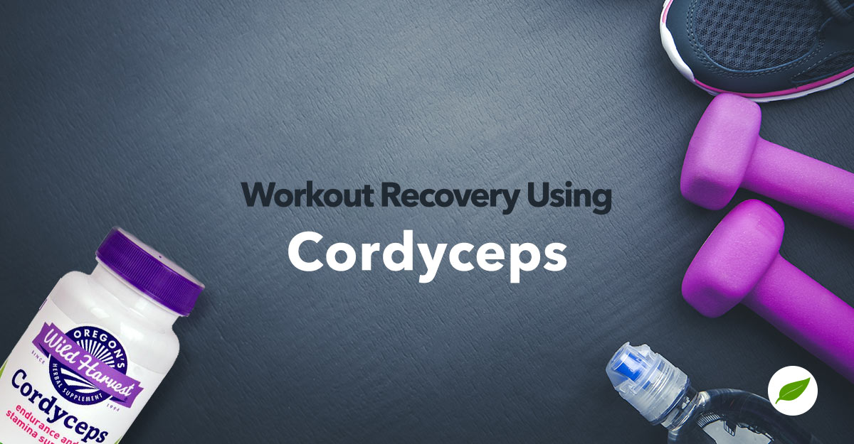 cordyceps for workout recovery