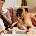 Pet Allergies? How To Be A Good Guest, or Host