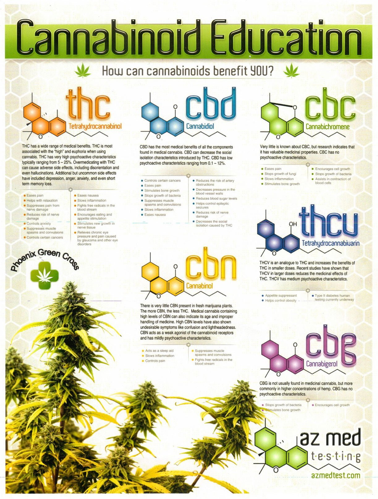 Cannabinoid Infographic