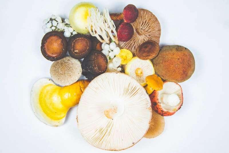 Mushrooms variety