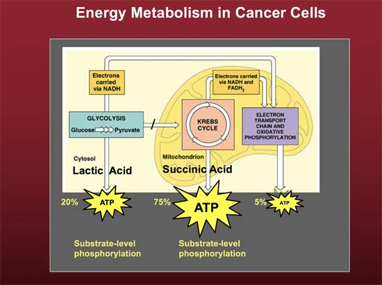 energy metabolism in cancer cells