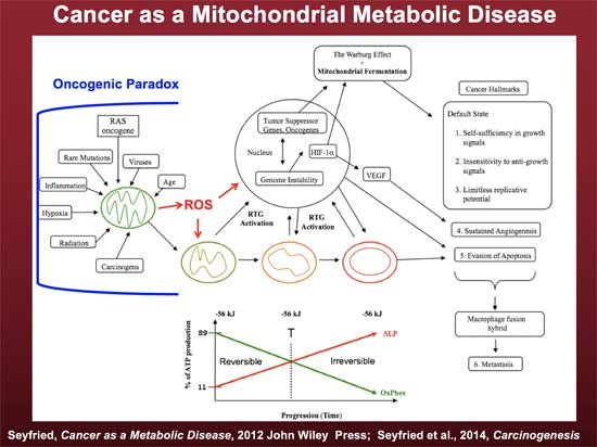 cancer as a mitochondrial metabolic disease
