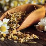 Chamomile: Still a Top Choice for Improved Well-Being
