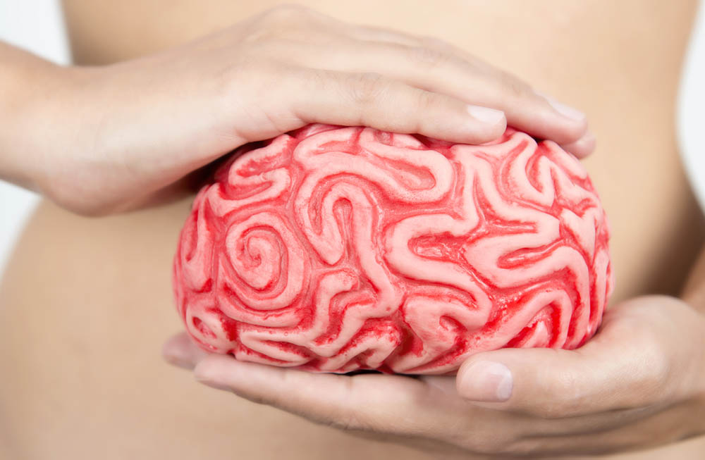 zenflore-brain-in-your-stomach