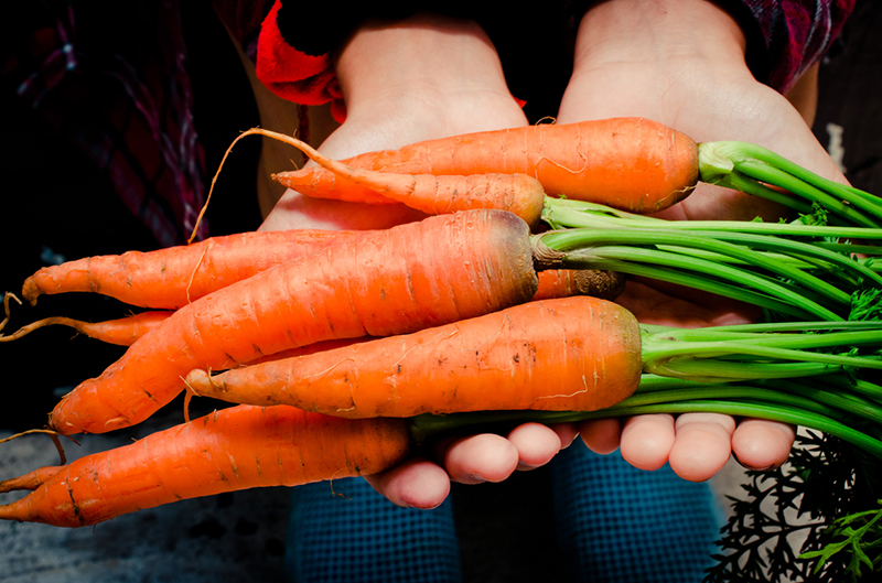 hand-holding-full-sized-carrots-9-foods-that-could-help-prevent-cancer-if-added-to-diet-given-by-Rick-Hay-healthista