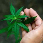 Can CBD Help You Lose Weight?
