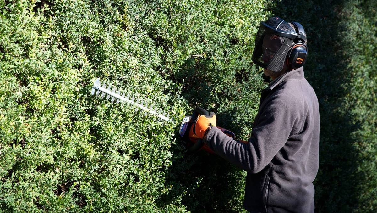 Winter is rose pruning time and a great opportunity to reshape trees with a chainsaw or pole pruner, in particular deciduous trees that have shredded their leaves during autumn.