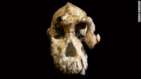 The amanensis skull.