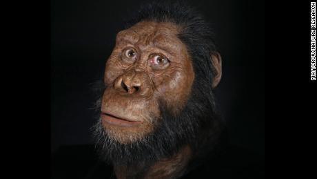 A facial reconstruction of amanensis.