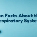 Fun Facts About the Respiratory System