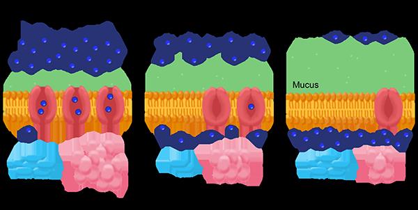 MCH cystic fibrosis