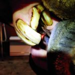 Cavvy Savvy: Dentistry: Not Just a Treatment – Tri-State Livestock News