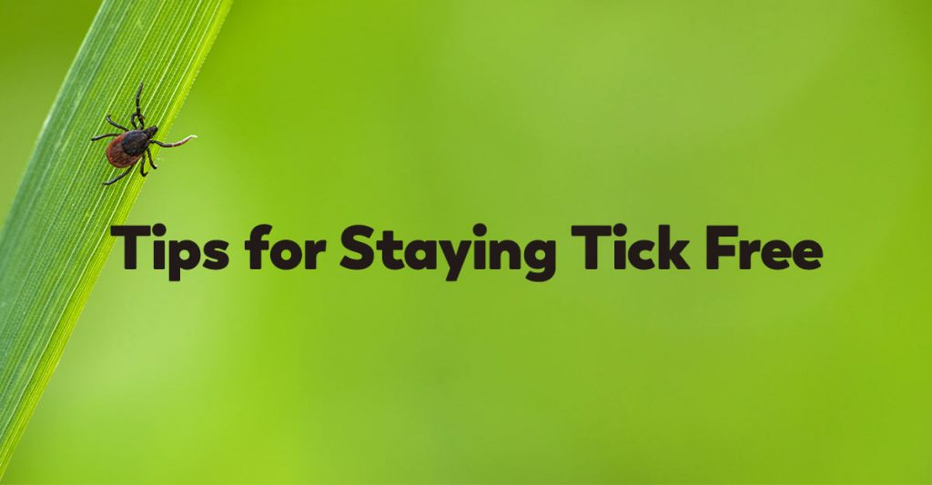 tips-tick-free-spring-summer-warm-weather